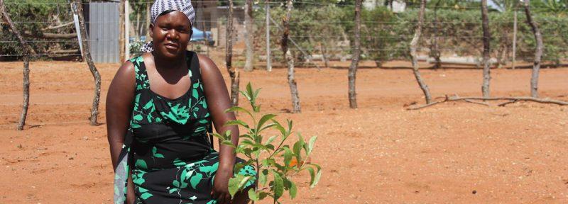 Baobab Guardian Doris Nekhumbelo