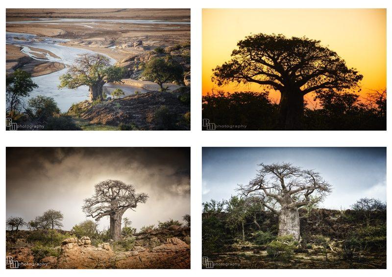baobab photography